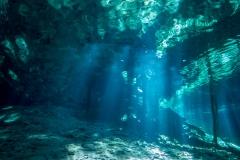 Cenoten, Dreamgate, Mexiko, Tauchen, Yucatan-5
