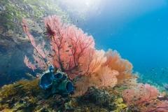 Pulau Pef, Raja Ampat-3
